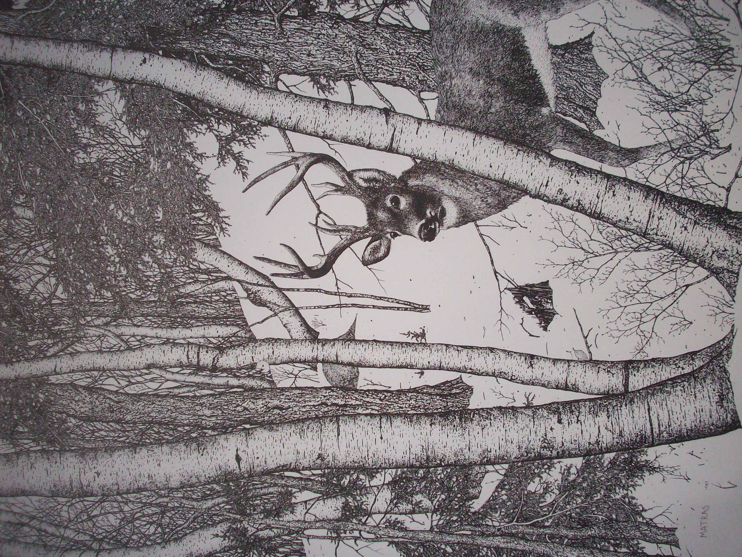 Ink Drawings by Gene Matras